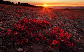 Khúc Ca Mặt Trời – Hải Linh